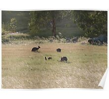 And now there are four! Western Greys, 'Arilka' Adelaide Hills. S.A. Poster