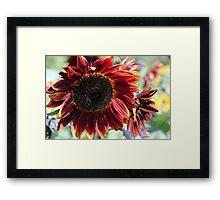 Sunflower 15 Framed Print