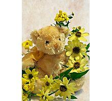 Teddy Bear - Yellow Toto Lemon Rudbeckia Photographic Print