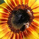 Sunflower 18 with Bees by marybedy