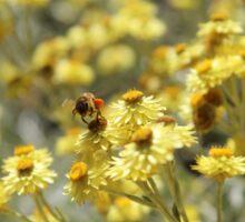 Bee In Flight - Yellow Flowers Sticker