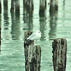 seagulls by peano12