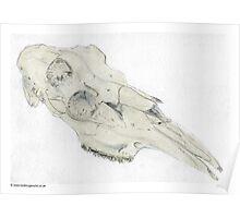 Moose Skull Poster