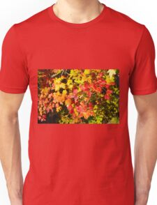 Background of bright red and yellow maple leaves Unisex T-Shirt