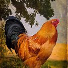 Chanticleer in Blue by Lois  Bryan