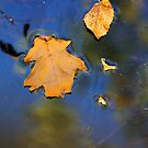 Wetland Fall 11 by marybedy