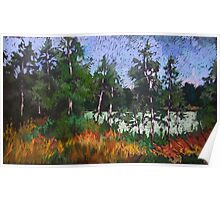 Birches around a lake Poster