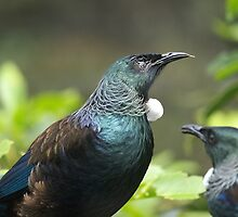 The one eyed Tui..........! by Roy  Massicks