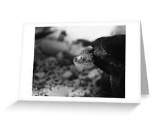 Turtle - Sea life Melbourne 2014  Greeting Card