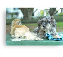 Cute pup Canvas Print