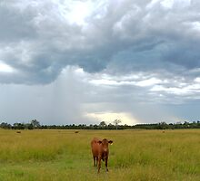 Stormy cow by Nic MacBean