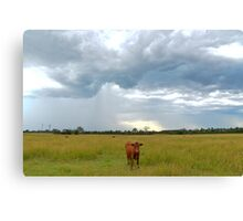 Stormy cow Canvas Print