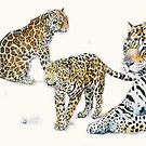 Jaguar by BarbBarcikKeith