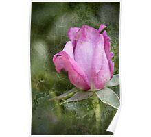 Crackled Rose Poster