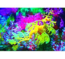 seahorse coral reef animal abstract Photographic Print