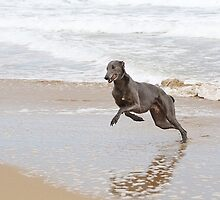 Giddy-Up Oscar! by HoundExposure