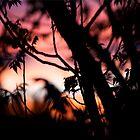 sunset through the trees by peterhau