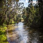 Campaspe river 2 by shaynetwright