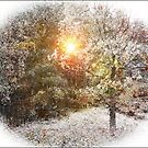Winter is getting closer by julie08