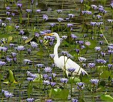 A Sea Of Lillies by byronbackyard