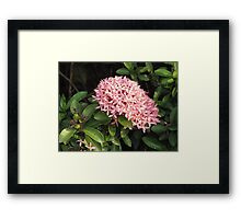 Bouqet of Pink Framed Print