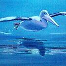 Pelican Flying, Lake Macquarie, NSW, Australia by carolelliott7