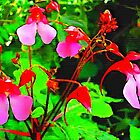 Impatient About Impatiens by BrianJoseph