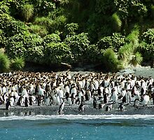Sharing the Beach: Royal & King Penguins by Carole-Anne