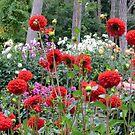 Dahlia garden - Paris 2014 by bubblehex08