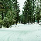 Woods on a snowy morning by Bryan D. Spellman