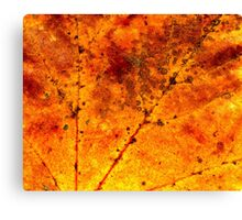 Fall maple leaf texture Canvas Print