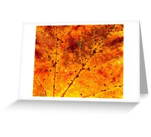 Fall maple leaf texture Greeting Card
