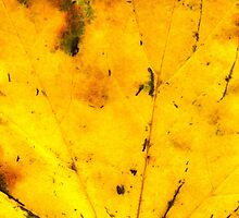 Fall maple leaf texture 2 by AnnArtshock