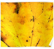 Fall maple leaf texture 2 Poster