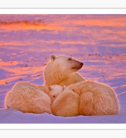 Polar family sunset Sticker