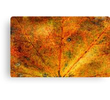 Fall maple leaf texture 3 Canvas Print
