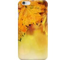 Fall maple leaves 2 iPhone Case/Skin