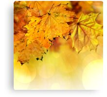 Fall maple leaves 2 Canvas Print