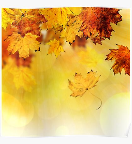 Fall maple leaves 3 Poster