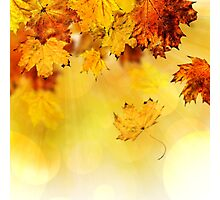Fall maple leaves 3 Photographic Print