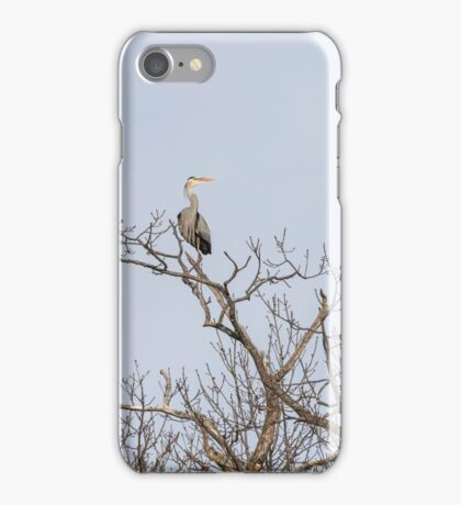 Great Blue Heron 2015-6 iPhone Case/Skin