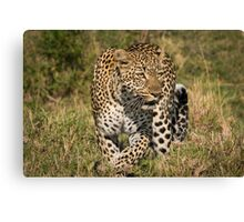 The Elusive Leopard Canvas Print