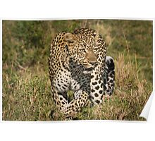 The Elusive Leopard Poster