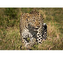 The Elusive Leopard Photographic Print
