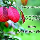 Fall Foliage Feature Banner... by Poete100