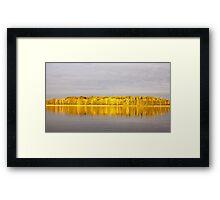 Lemon lanterns Framed Print
