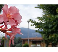 Flowers in Italy Photographic Print