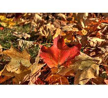 Fallen Leaves V Photographic Print