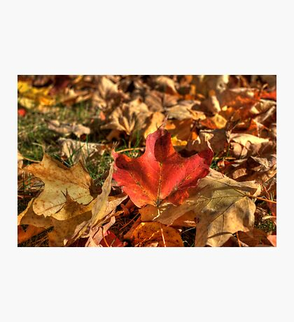 Fallen Leaves V Photographic Print