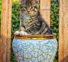 Pot Of Baby Kitten by BonniePhantasm